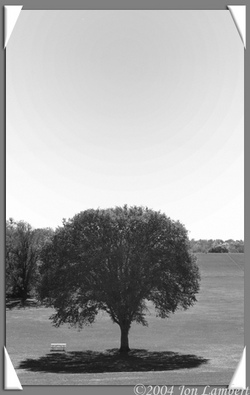 Lonelytree_2